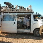 March� Tanout - Niger 2005